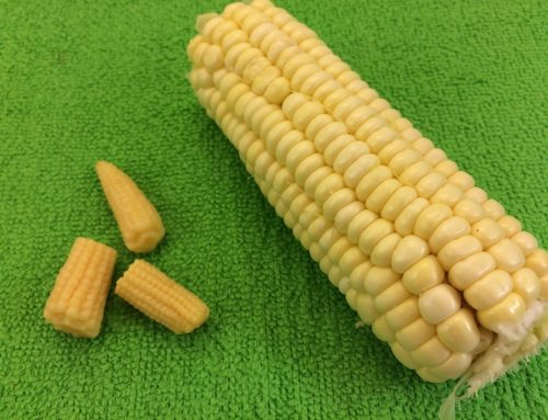 What is Baby Corn?