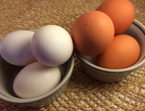 Is There A Difference Between Brown and White Eggs?
