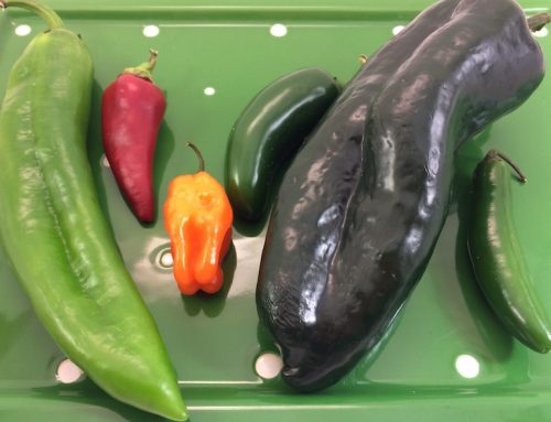 What Makes a Pepper Hot?