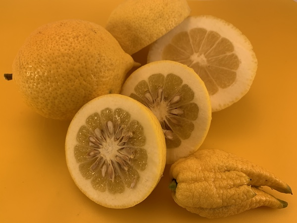 what is citron