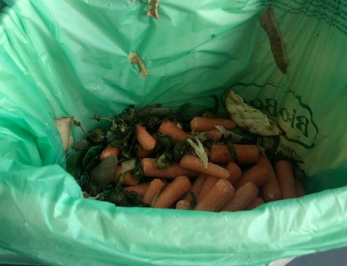 How to Dispose of Food Scraps