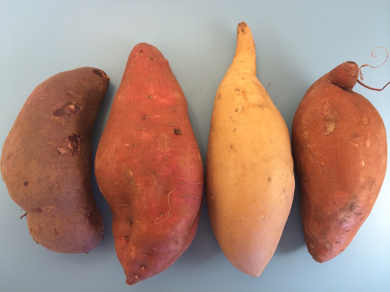 Difference between sweet potato and yam yahoo dating 8