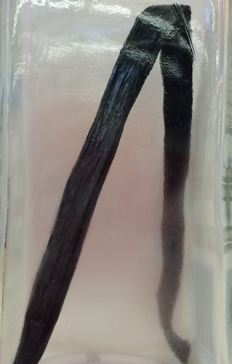 How to Store Vanilla Beans